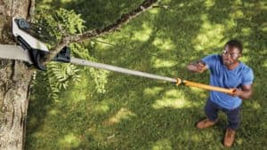 best tool for cutting tree branches